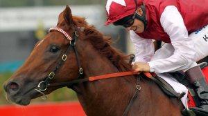 sepoy weekend king racing