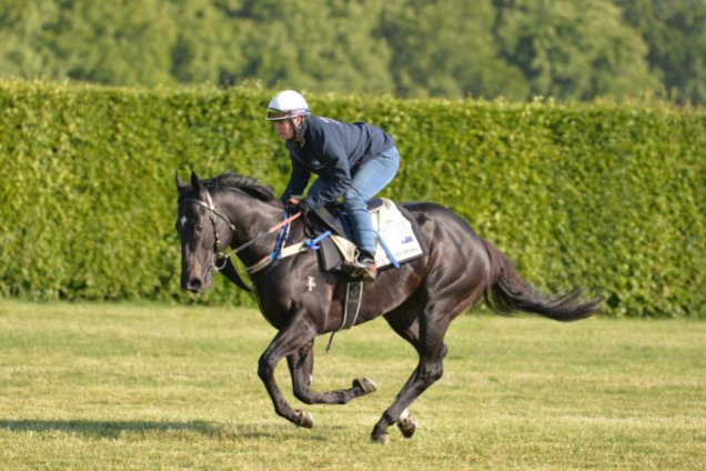 Brazen Beau goes out for a morning trot in prepartion for the Diamond Jubilee Stakes