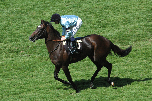 Telescope is chasing back to back Gr1 Hardwicke Stakes win on Day 5 of the carnival