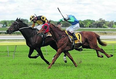 weekend horse racing tips