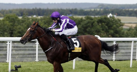 Highland-Reel-horse-betting-Cox-Plate