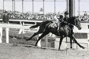 Tulloch won the 1957 Caulfield Cup becoming the shortest priced favourite in the history of the race.