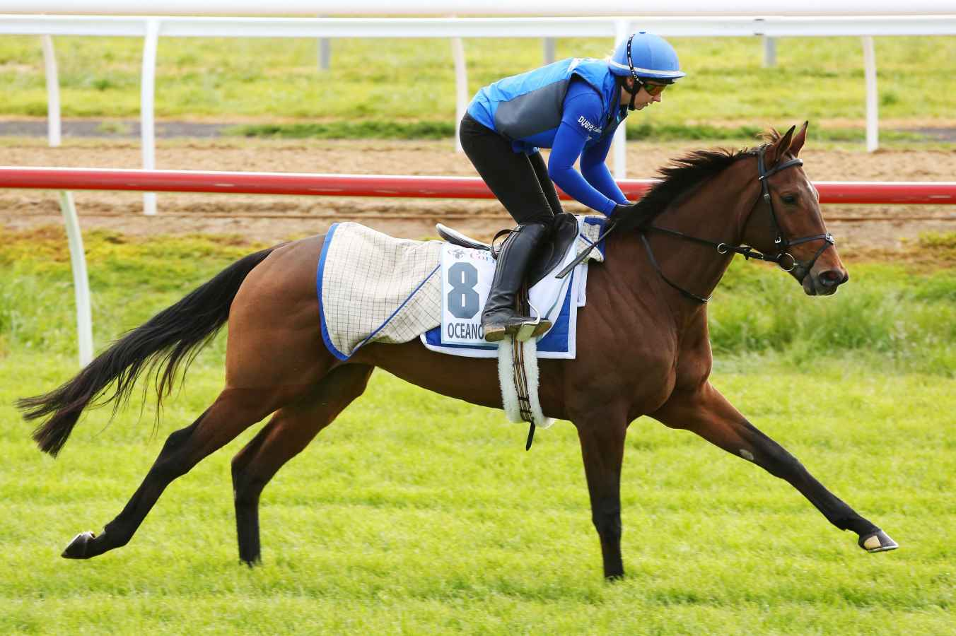 oceanographer-is-among-the-nominations-for-the-lexus-stakes-1477377980_1352x900