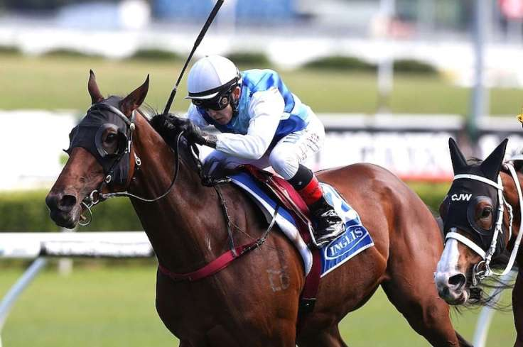 RUDY HORSE.jpg