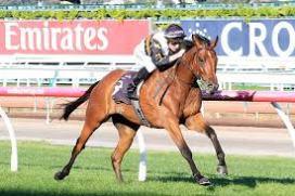 cool chap horse.jpeg
