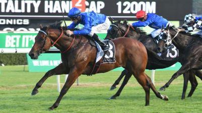 osborne-bulls-racehorse