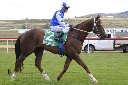 NOBLE BOY HORSE.jpg