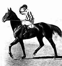 old race horse